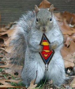 supersquirrel2